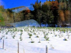 October snowfall, near Peles