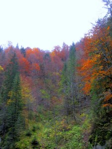 Fall foliage in the Bicaz Gorge