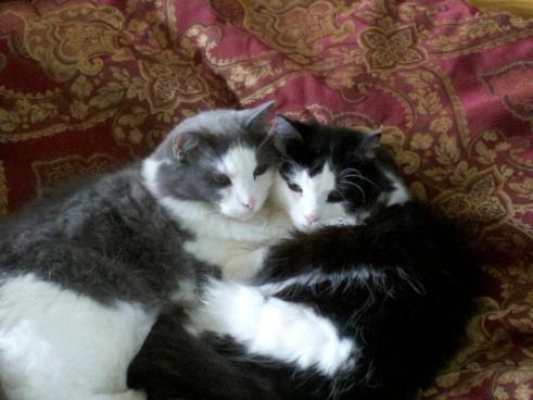 smokey luna sibling love