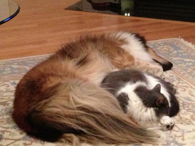 Cassie and Smokey